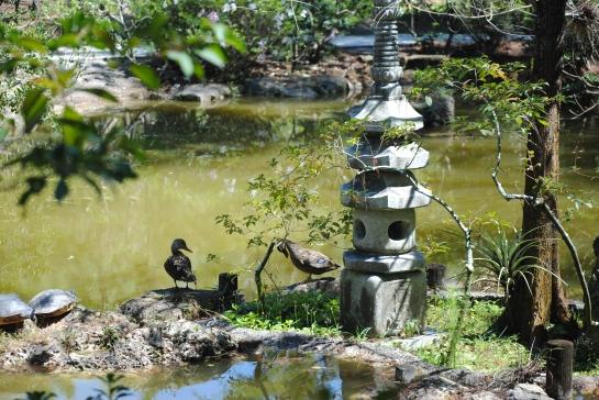 Zen duck 3