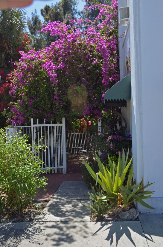 Streetscape gardens of Eau Gallie, Fla.