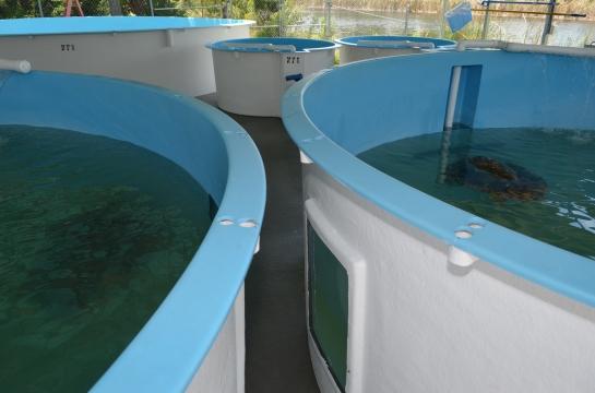 Sea turtle tanks at Brevard Zoo