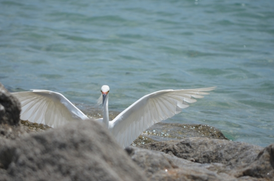 Surprise bird encounter on the rocks at Sebastian Inlet, Fla.