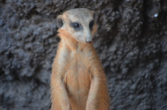 You mean I'm not in the Meercat group on cable tv?