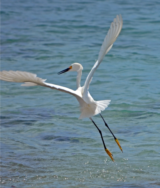 Bird at Sebastian Inlet: exit stage left