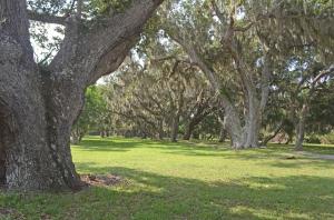 veryoldtrees
