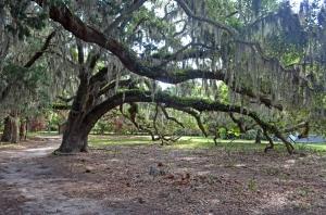 veryoldtrees2