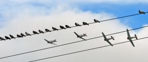 birdplane2