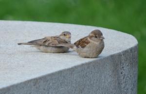 dcbirds