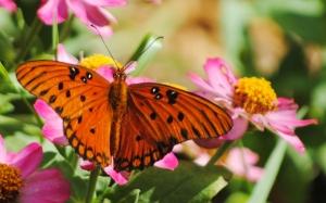 floridafallcolors