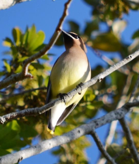 mysterybird2