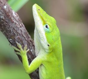 lizardface2